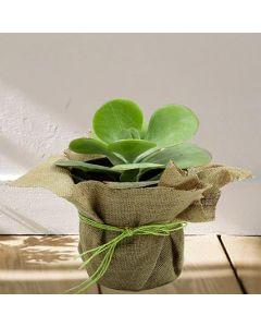 Special Succulent Plant