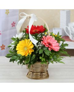 Round Basket Decorated with 6 Assorted Gerberas