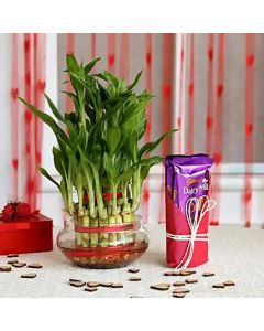 Dairy Milk Silk With Lucky Bamboo