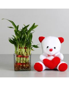 Lucky Bamboo With  Heart Teddy Bear Combo
